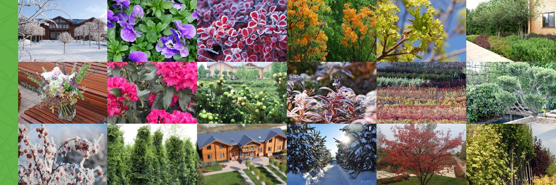 Садовый центр «Европарк»